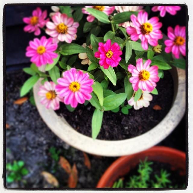 Flowers. Pink. Pretty.